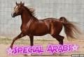 ☆special arabs☆